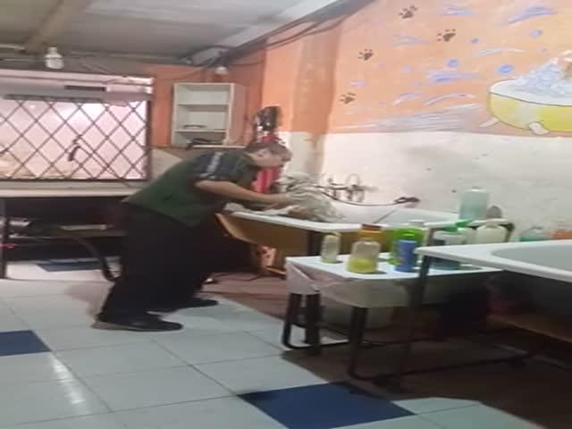 Пожилой грумер танцует за работой