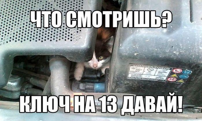 Свежие автоприколы (40 фото)