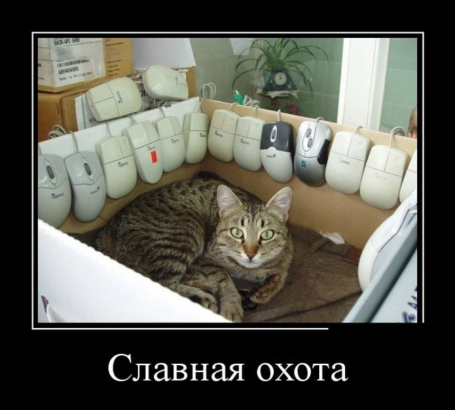 http://trinixy.ru/pics5/20160908/demotivatory_18.jpg