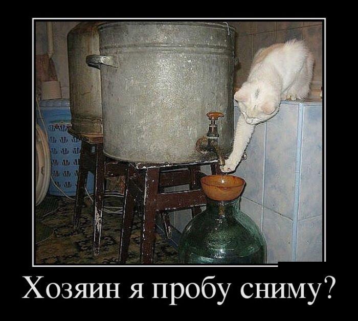 http://trinixy.ru/pics5/20160908/demotivatory_30.jpg