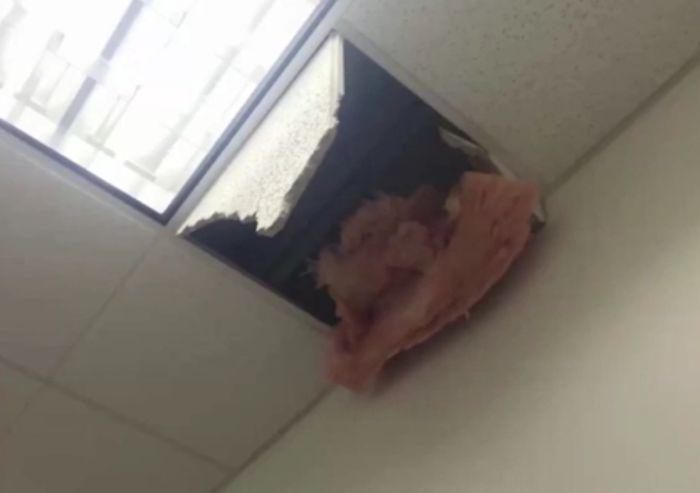 В Лас-Вегасе подозреваемый совершил дерзкий побег по время допроса (6 фото + видео)