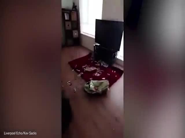 Собака принимает невинный вид