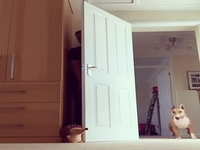 Парень троллит свою собаку