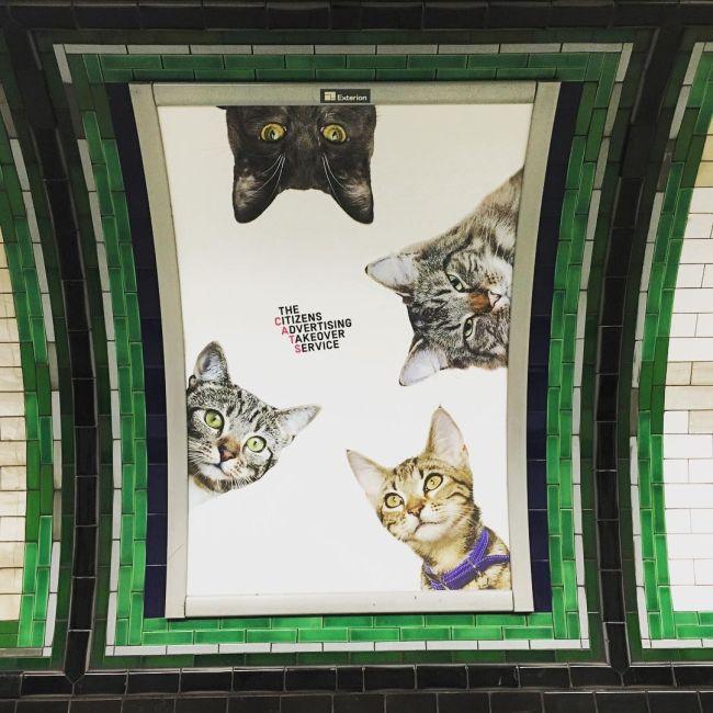 Станцию лондонского метро украсили фотографиями кошек из приютов (7 фото)