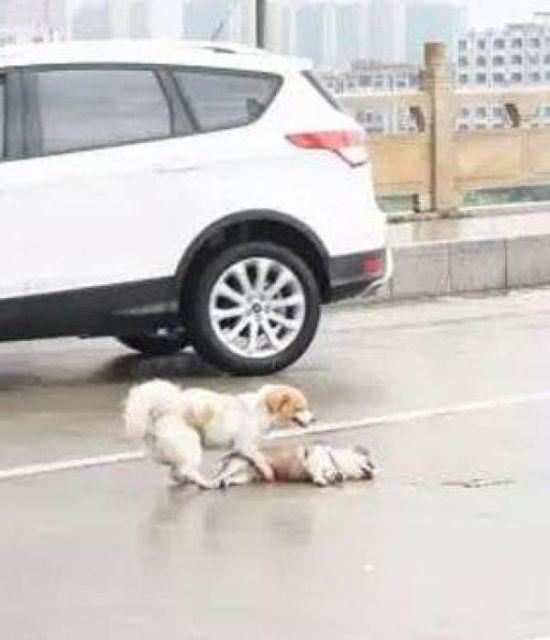 Собачья дружба (2 фото)