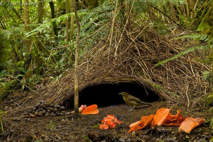 Тайны дождевых лесов Новой Гвинеи (32 фото)
