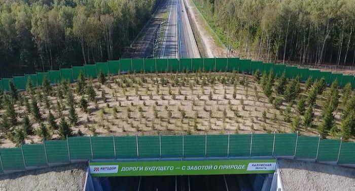 В Калужской области появился первый в России экодук (6 фото)