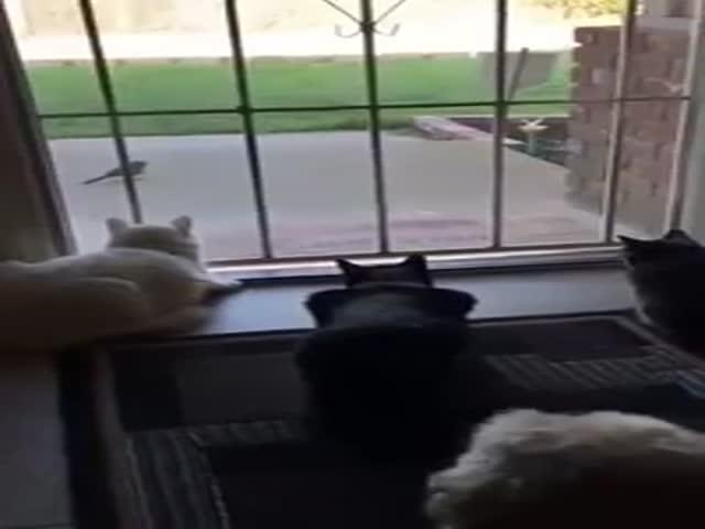 Собака напугала котов