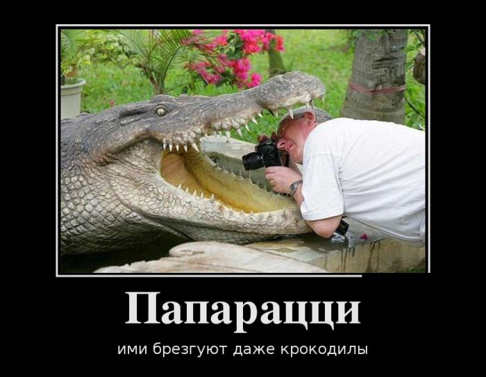 http://trinixy.ru/pics5/20160915/demotivatory_06.jpg