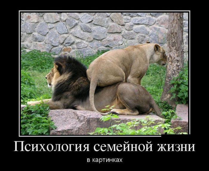 http://trinixy.ru/pics5/20160915/demotivatory_17.jpg