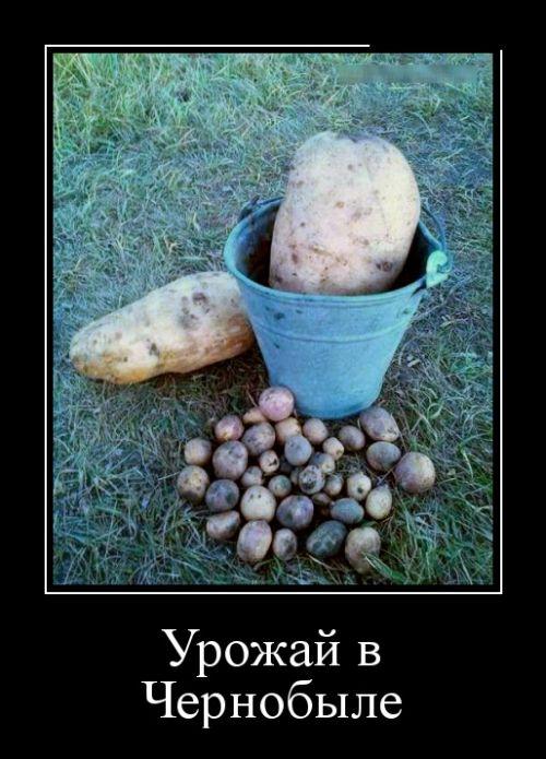 http://trinixy.ru/pics5/20160915/demotivatory_20.jpg