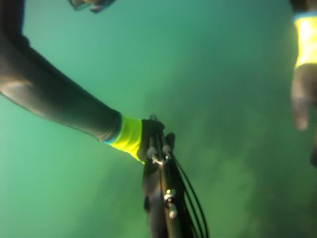 С помощью палки для селфи дайвер отбился от акулы