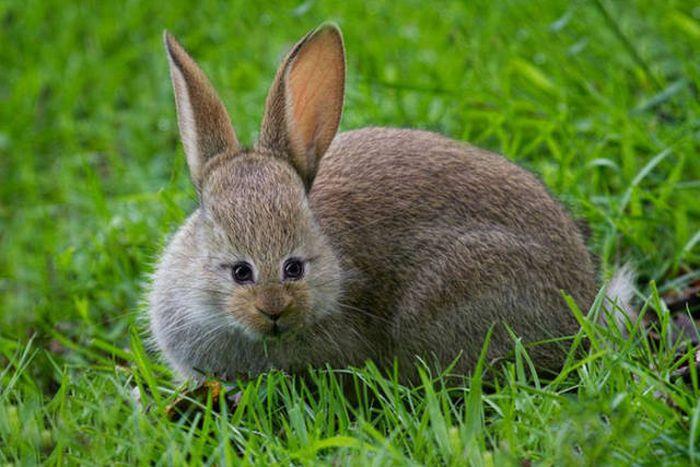 Если бы у животных было фронтальное расположение глаз (23 фото)