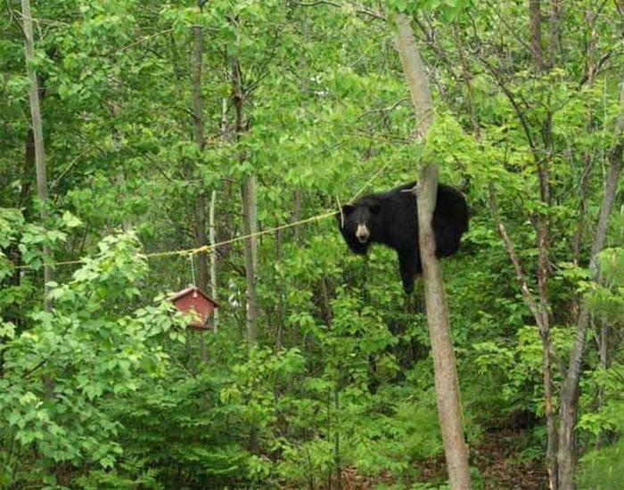 Медведь решил полакомиться медом (4 фото)