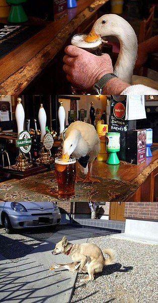 Алкогольный юмор (43 фото)