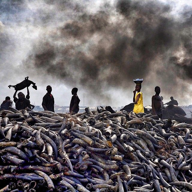 Фото журнала National Geographic в Instagram (52 фото)