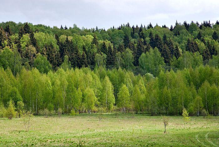 10 природных мест России, находящихся под угрозой исчезновения (12 фото)