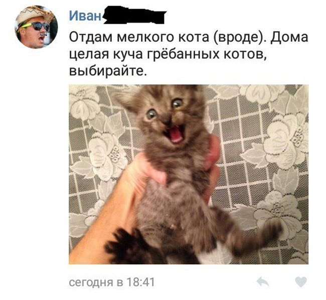 Прикольные комментарии из социальных сетей (32 скриншота)