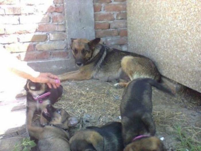 Сербская зоозащитница спасла собаку, поселившуюся на могиле умершего хозяина (8 фото)