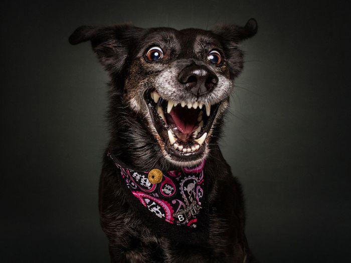 Смешные собаки ловят лакомство (30 фото)