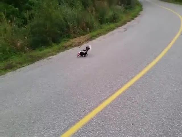 Канадец спас скунса, застрявшего в банке головой