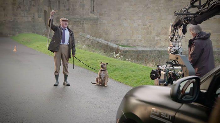 Самая одинокая собака Великобритании станет звездой 5-й части «Трансформеров» (6 фото)