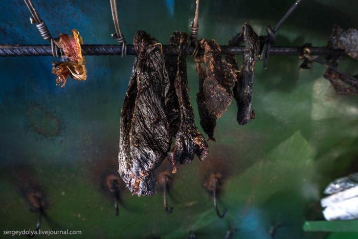 Как живут современные чукчи (29 фото)