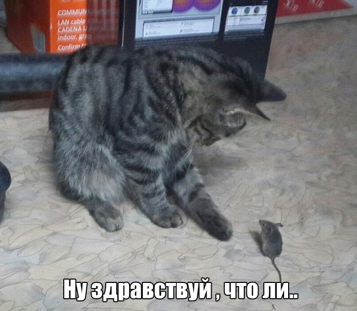 http://trinixy.ru/pics5/20160929/podborka_vecher_33.jpg