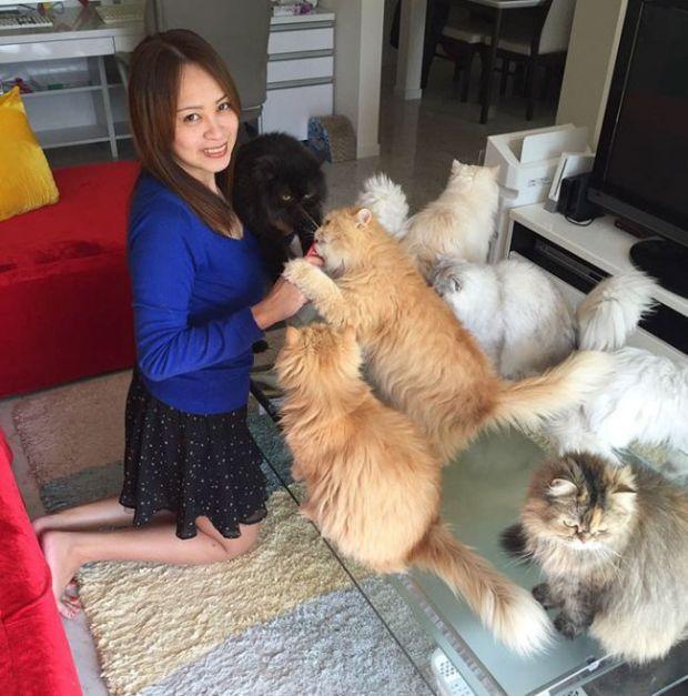 «Кошачья мама на полный день» и ее 12 кошек (17 фото)