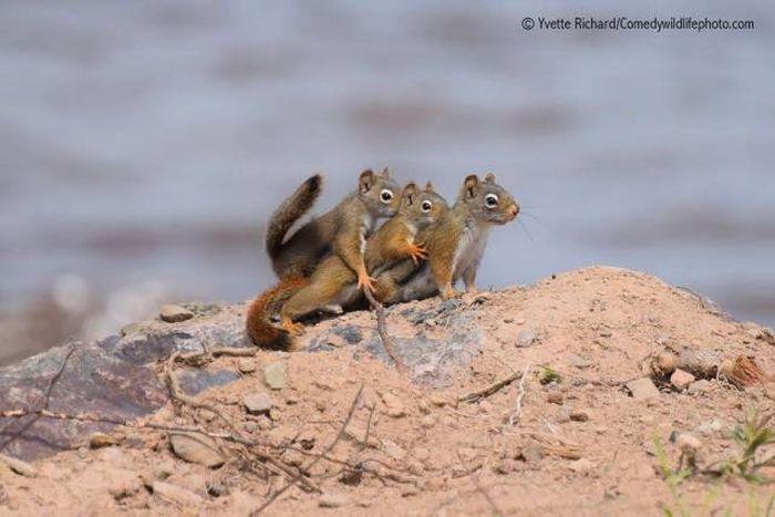 Забавные животные в дикой природе (44 фото)