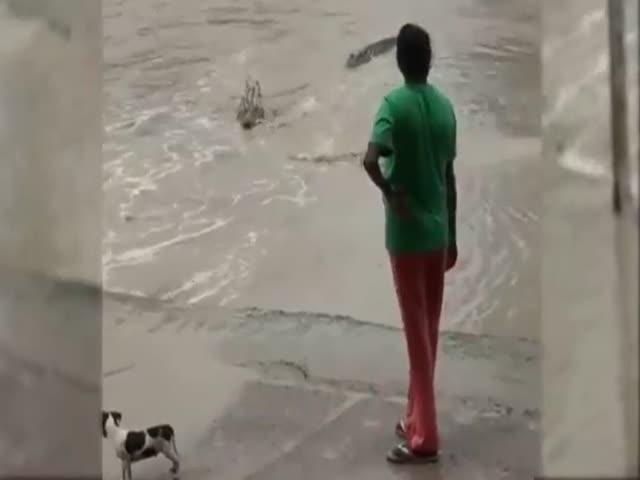 Смелая женщина прогнала крокодила