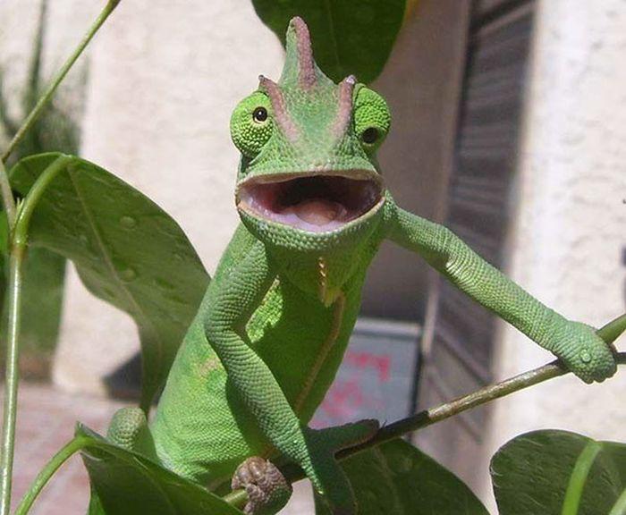 Смешные нефотогеничные животные (40 фото)