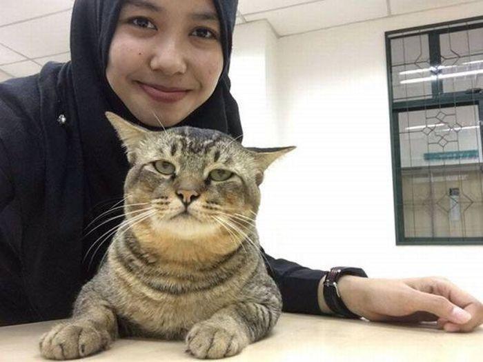 Кот, который ходит на пары (3 фото)