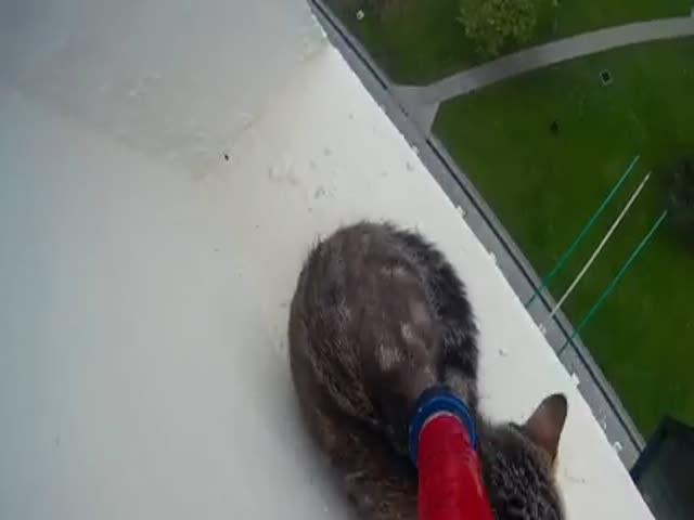 Спасение котенка, застрявшего на 12-м этаже