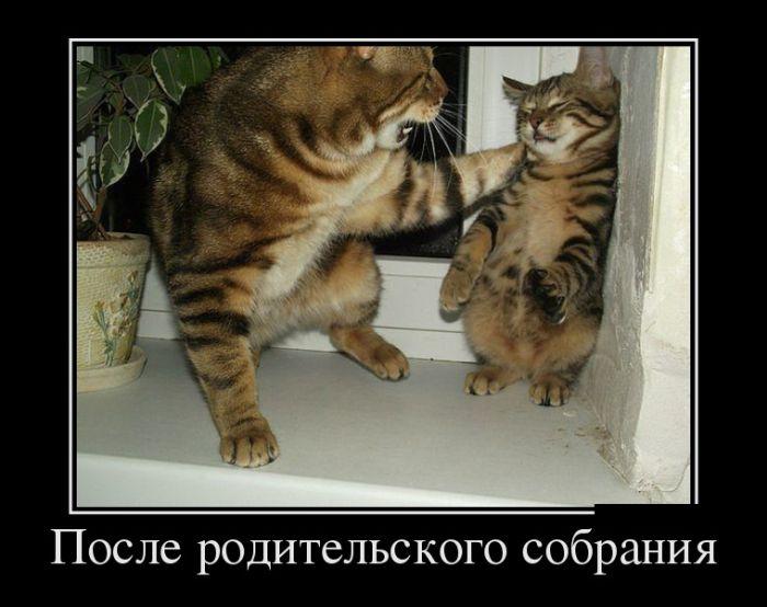 http://trinixy.ru/pics5/20161006/demotivatory_01.jpg