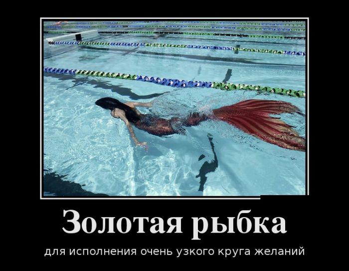 http://trinixy.ru/pics5/20161006/demotivatory_14.jpg