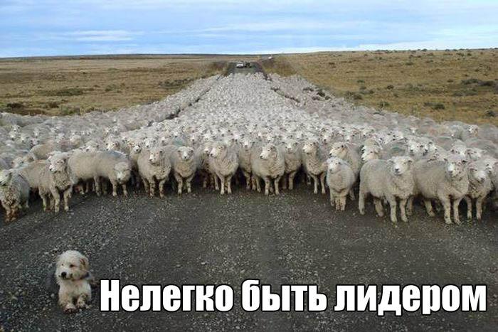 http://trinixy.ru/pics5/20161006/podborka_vecher_24.jpg