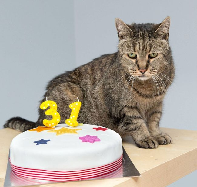 Самый старый в мире кот (7 фото)