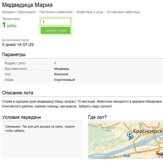 В Красноярском крае медвежонка Машу продают на интернет-аукционе за один рубль (4 фото)
