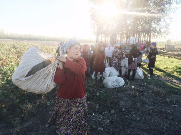 В Узбекистане за съемку сбора хлопка задержали фотографа (3 фото)