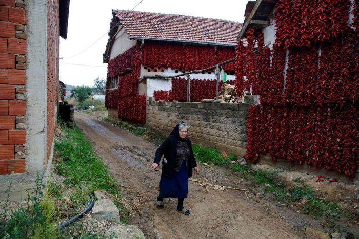 Деревня Donja Lakosnica - сербская «столица паприки» (16 фото)