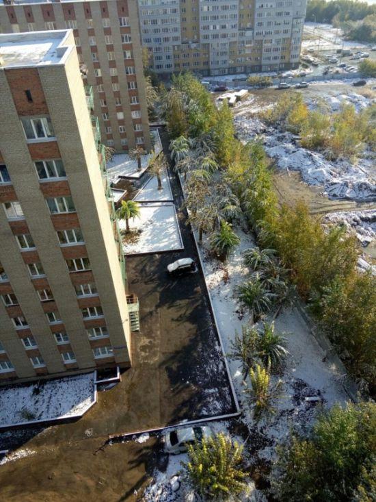 Первый снегопад в Омске «превратил» деревья в пальмы (5 фото)