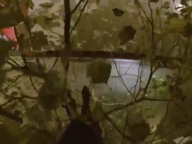 Руфер прокатился на крыше автобуса