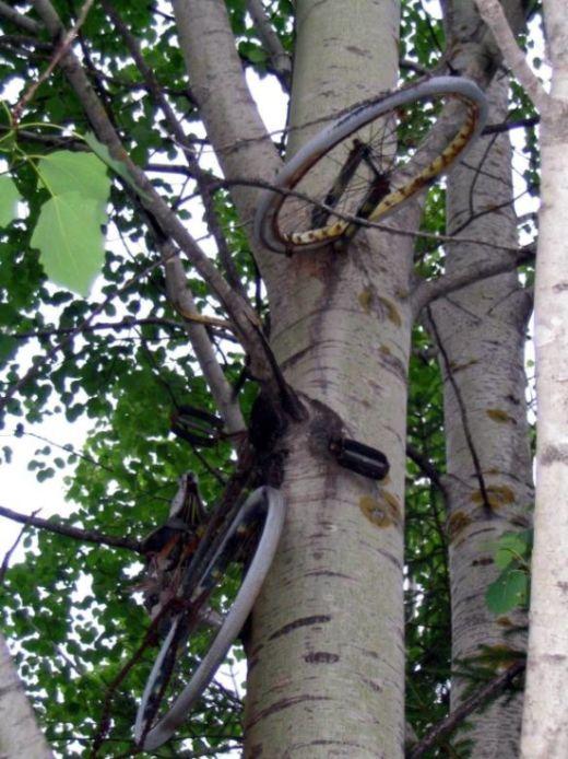 Предметы, вросшие в деревья (43 фото)
