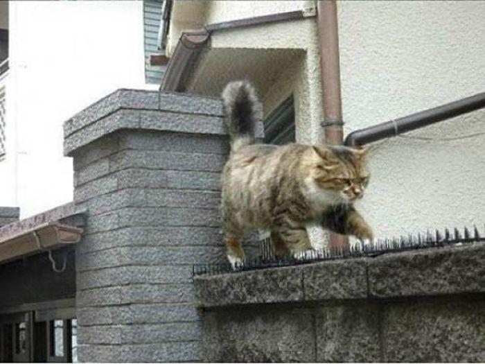 Шипы от котов (4 фото)