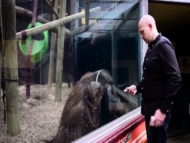 Орангутан и фокус с перемещением карты