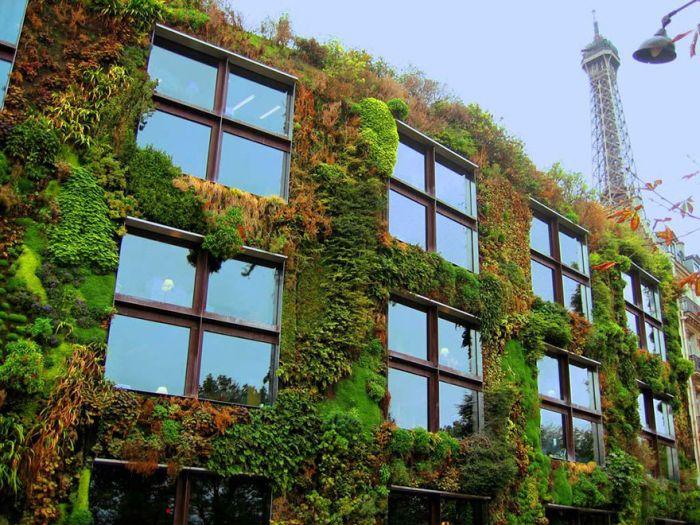 Власти Парижа поддержат развитие частных городских садов (6 фото)