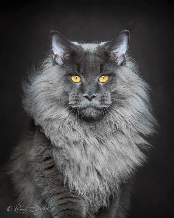 Подборка самых красивых кошек (29 фото)
