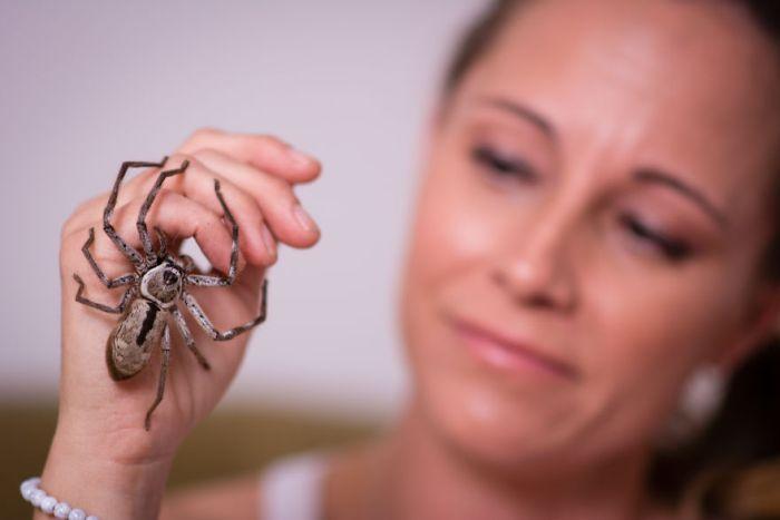 Энтомолог из Австралии считает ядовитых пауков лучшими домашними животными (16 фото)