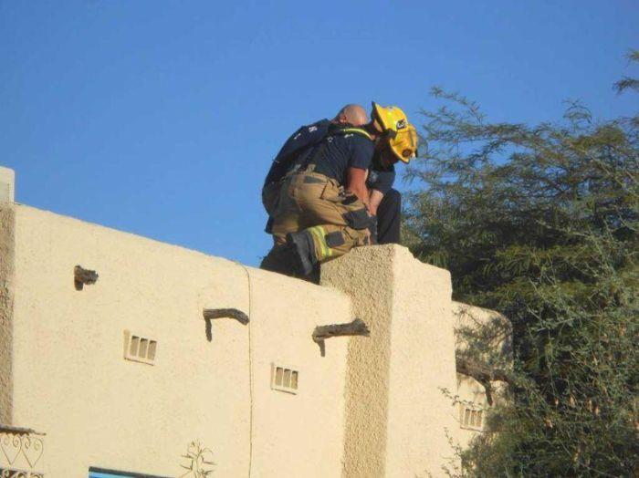 В США спасатели достали из дымохода «домовенка Кузю» (4 фото)